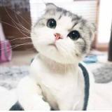 涵宝贝家猫小喵   斗鱼直播